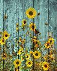 Rustic Sunflowers Butterfly Country Farmhouse Wall Art Home